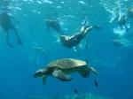 Athena Swims w Turtles (1)