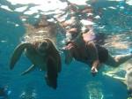 Hawaii Ocean Tours near Maui