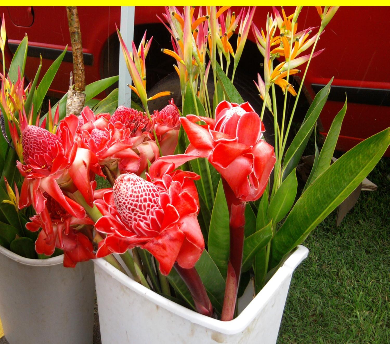 Maui Swap Meet on Saturdays